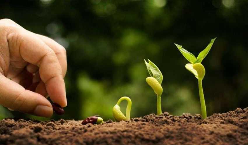 Agevolazioni agricoltura 2021: quali sono, cosa spetta, novità e bonus