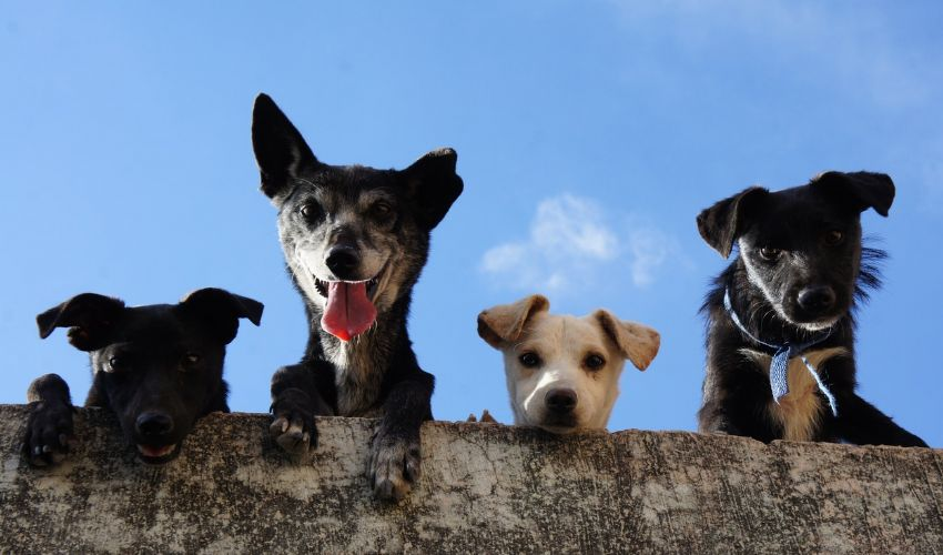 Bonus animali 2021: cos'è e come funziona, importo spese veterinarie
