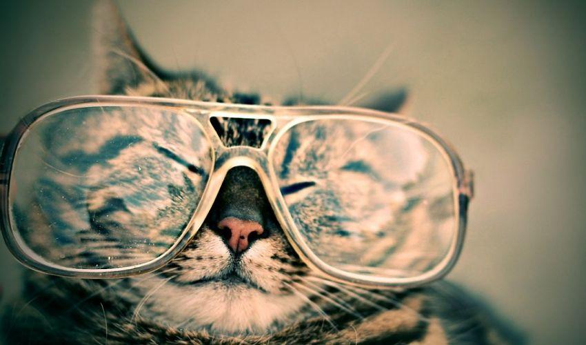 Bonus occhiali e lenti a contatto 2021: a chi spetta come richiederlo