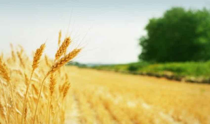 IMU agricola 2019: chi deve pagare l'imu terreni, esenzione e scadenza