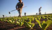 Bonus agricoli 2021: niente Sostegni sale la rabbia del comparto
