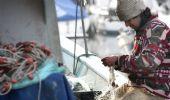 Bonus agricoli e pesca 2021: quanto spetta e requisiti, Sostegni bis