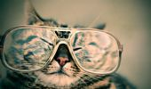Bonus occhiali e lenti a contatto 2021: a chi spetta e come funziona