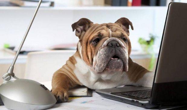 ASL anagrafe canina: cos'è, come funziona iscrizione, costo e sanzioni