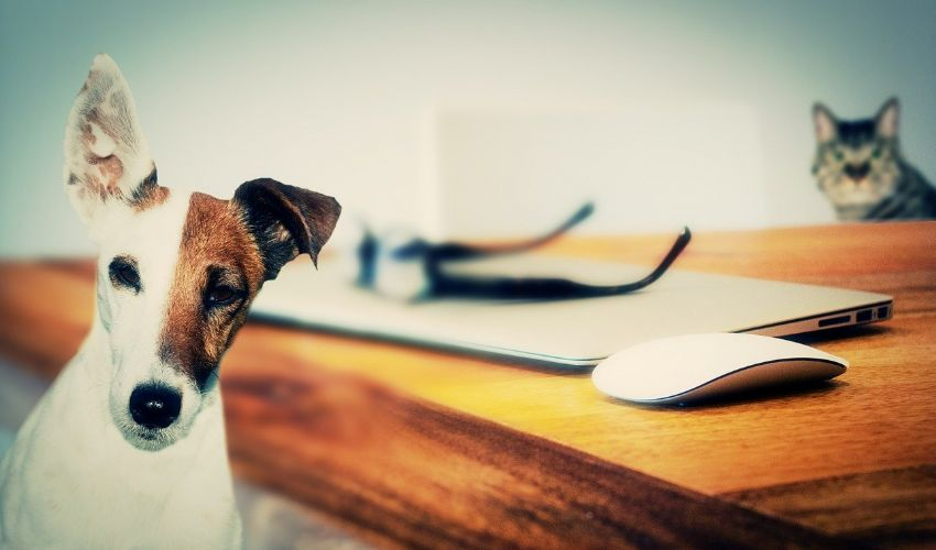 In onore di Briciola, la gatta che riscatta post orrendi sugli animali