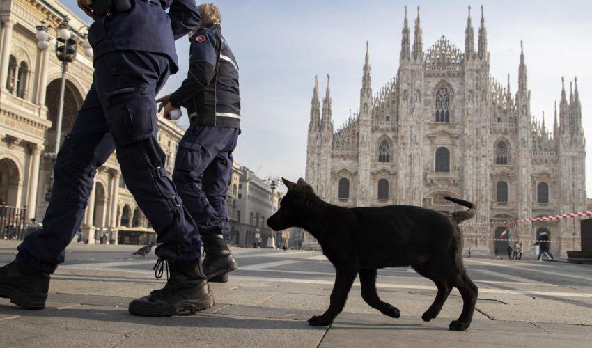 Milano, cinque cani morti folgorati a causa della neve: ecco il perché