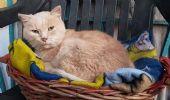 Addio a Rosy, il gatto della pittrice Elena Guastalla non aspetta più