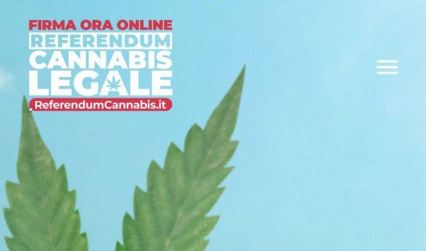 Referendum sulla cannabis, oltre 330 mila firme (anche digitali)