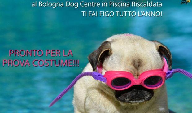 SPA, terme e palestra per gli amici a 4 zampe: è il Bologna Dog Centre