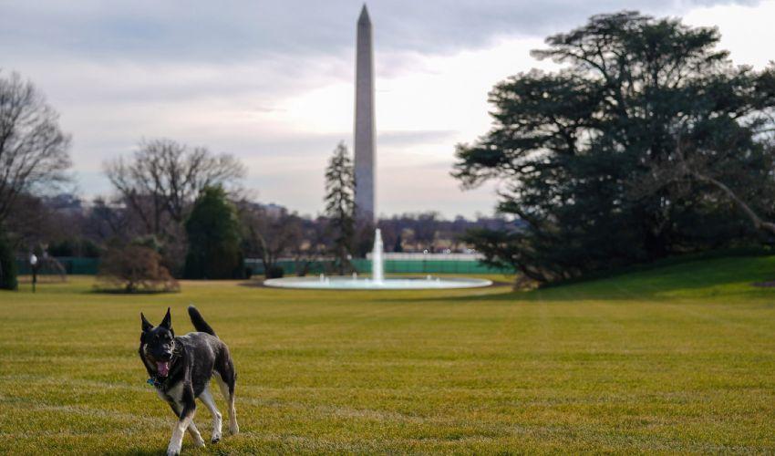 Champ e Mejor, i cani di Joe Biden sono arrivati alla Casa Bianca
