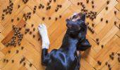 USA, muffa nel cibo: morti 70 cani. Altri 80 in gravi condizioni
