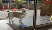 Turchia: il padrone è ricoverato, il cane aspetta fuori dall'ospedale