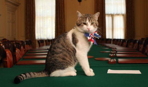 """Il gatto Larry, i 10 anni da """"Chief Mouser"""" di Downing Street"""