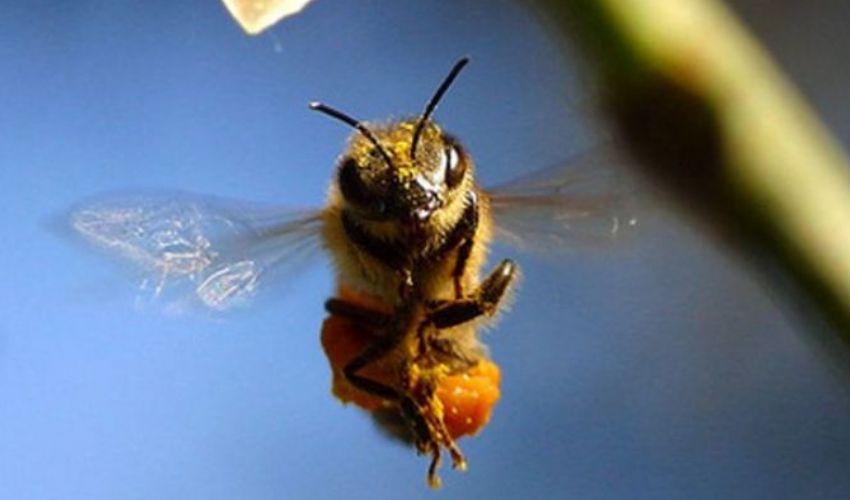 Puntura vespa, ape e calabroni: cosa fare e rimedi gonfiore e bruciore