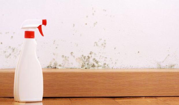 Muffa sui muri e pareti: rimedi naturali per eliminare le macchie