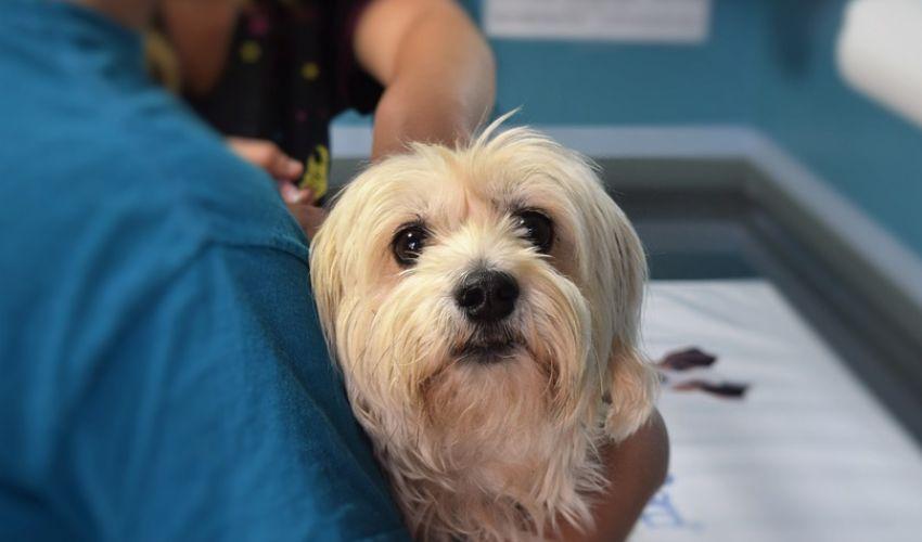 Vaccino anti-Covid per gli animali: è in arrivo dalla Russia. Cos'è?