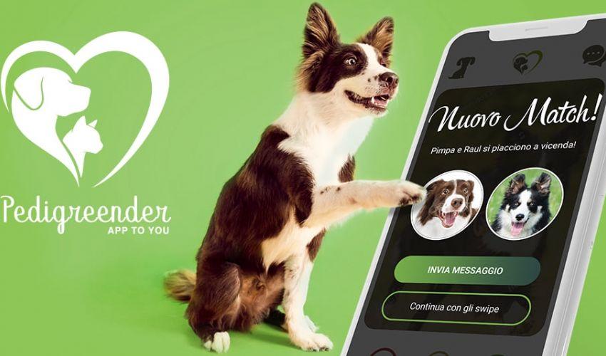 Pedigreender, l'app di incontri per cani e gatti: come funziona