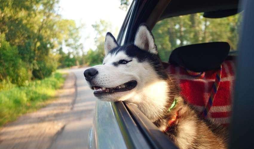 Vacanze animali 2020: le regole per partire con gli amici a 4 zampe