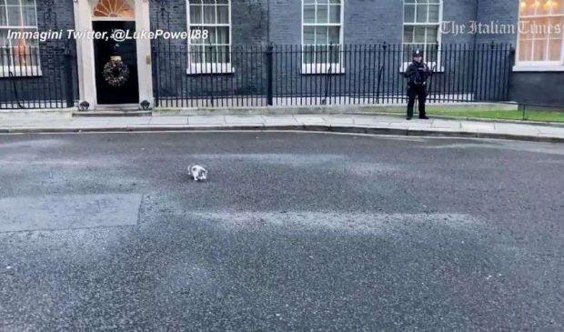 Brexit, il gatto Larry ruba la scena a Downing St. nel giorno del deal