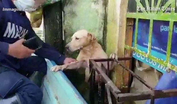 Messico, il cane salvato dall'alluvione: il video diventa virale