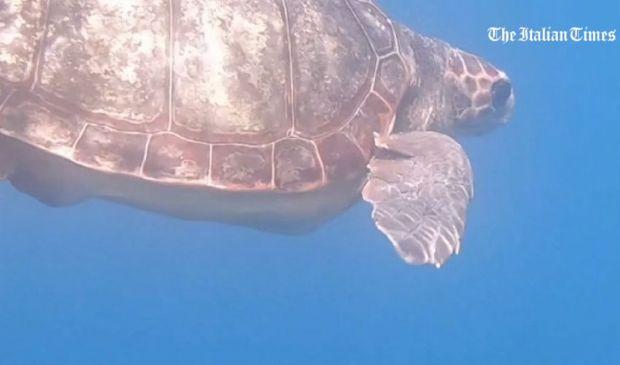 Procida, l'emozionante liberazione di due tartarughe: Spring e Liliana
